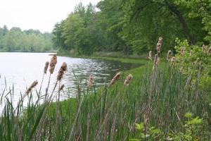 Wetland-Management-300x200